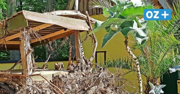 Neues Gehege für Zebramagusten im Stralsunder Zoo