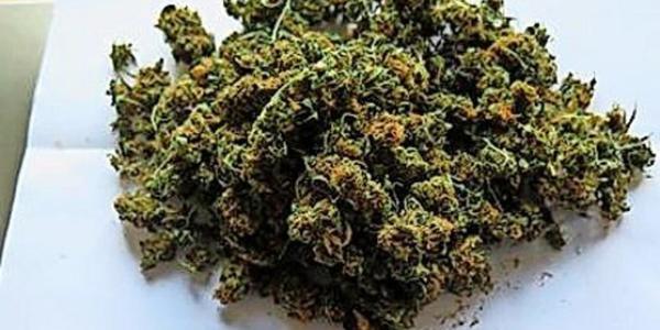 Bundespolizei findet in Dohna 120 Kilogramm Marihuana in Lkw