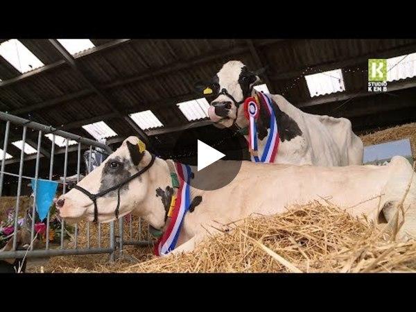 WOUBRUGGE - 'Kanjerkoeien' gehuldigd met drive-thru (video)