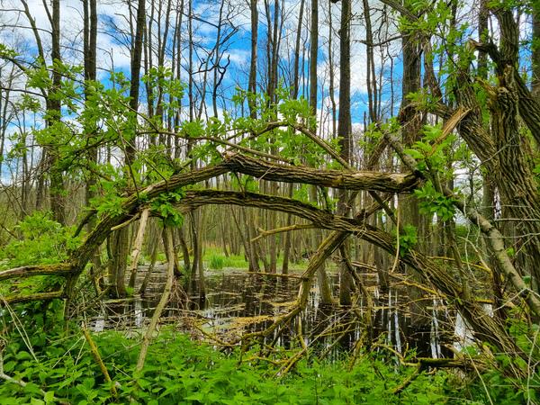 Unberührte Natur bei Tribohm (Foto: Marion Schmidt)