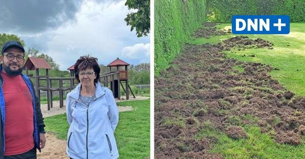 Hunderte Wildschweine in Greifswald unterwegs - Anwohner in Angst