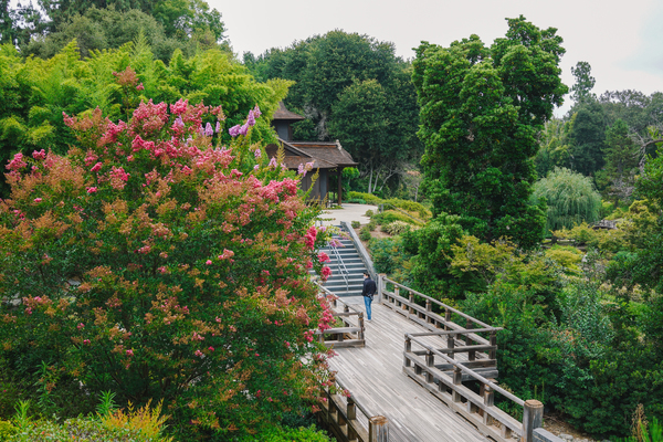 strolling the Japanese section of The Huntington