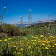 Flores del Montsec | Felix Marimon