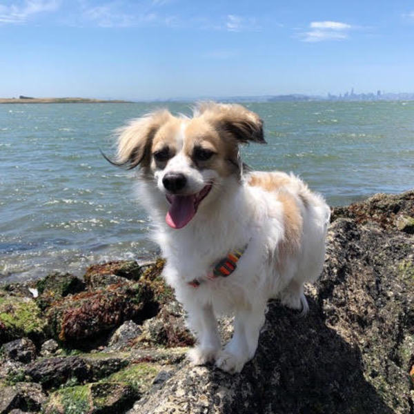 Ollie, who belongs to VIP Kim, loves the breeze on the Bay and the view of the City. Wish additional fame for your pet? hltr.co/pets