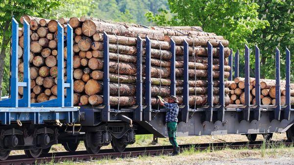 Trotz Rekordzahlen beim Einschlag: Baustoff Holz ist hierzulande Mangelware