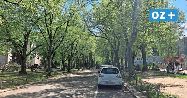 Schillingallee in Rostock soll umgestaltet werden: Das ist geplant