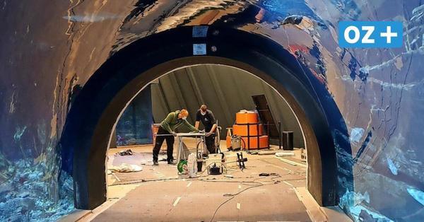 Stralsund: Ozeaneum öffnet am 1. Juni seine Türen – so läuft der Besuch ab