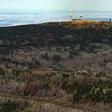 Volkswagen Group Services pflanzt 20.000 Bäume im Harz