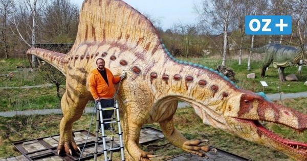 Dinopark Mölschow: Dieser 16 Meter lange Spinosaurus ist jetzt auf Usedom zu sehen