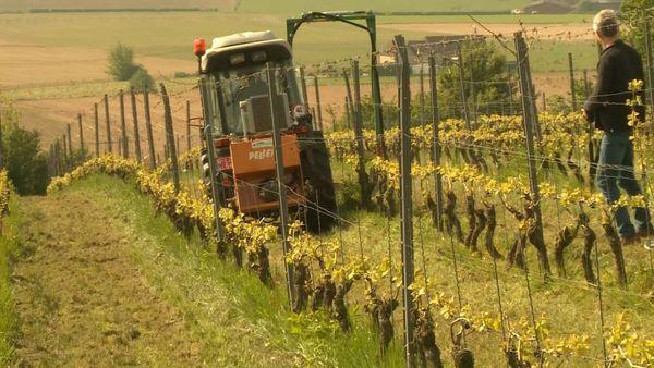 Les viticulteurs veulent travailler de manière plus durable. - Wijnbouwers willen duurzamer werken