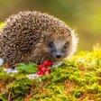 Garden Wildlife Week 2021