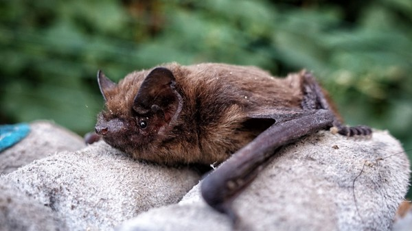 Green Tech: Bats, Biodiversity, and Building Databases