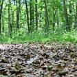 Eilenriede: Der Klimawandel macht auch vor Hannovers Stadtwald nicht halt