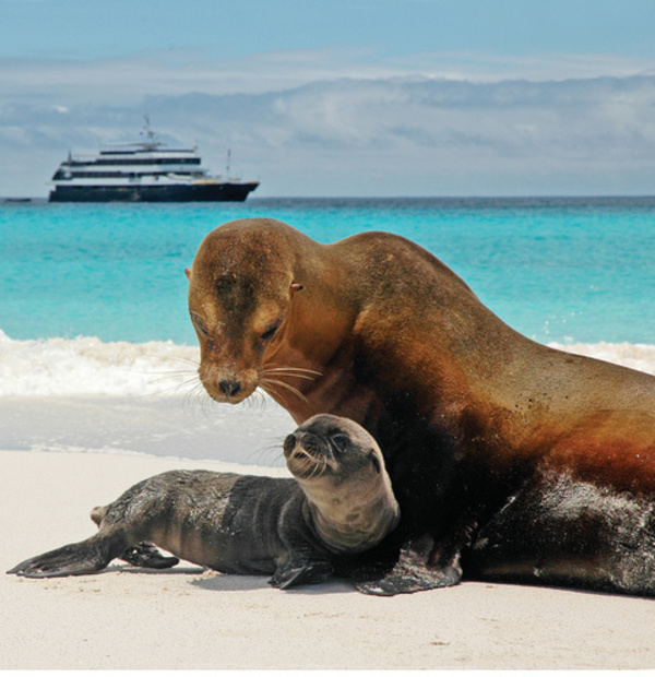 Bid on Charitybuzz and Win a 9-Night Expedition Exploring the Galápagos Islands