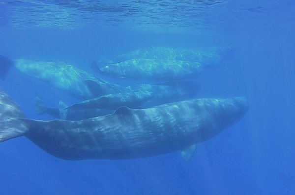 Yemeni fishermen hit jackpot with $1.5M of 'whale vomit'   Daily Sabah