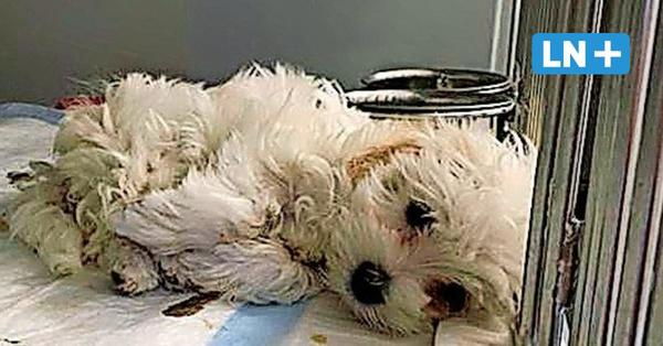 Lübeck: Illegaler Welpenhandel - Tierheim nimmt wieder Hunde auf