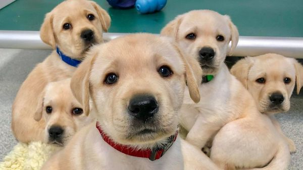 Kommunikation zwischen Mensch und Hund: Schon Welpen verstehen uns