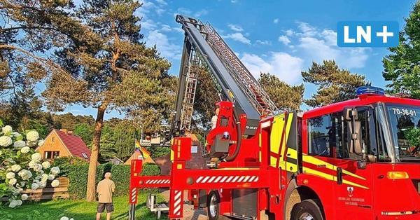 Feuerwehr rettet hilflose Katze in Ratzeburg vom Baum