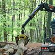 Kompromiss nach Streit um Holzeinschlag in lauenburgischen Kreisforsten