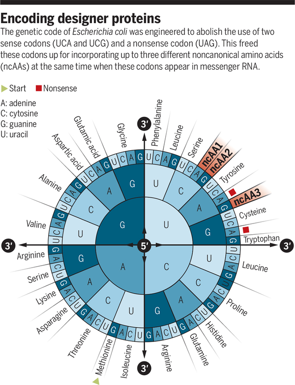 Rewriting the genetic code | Science