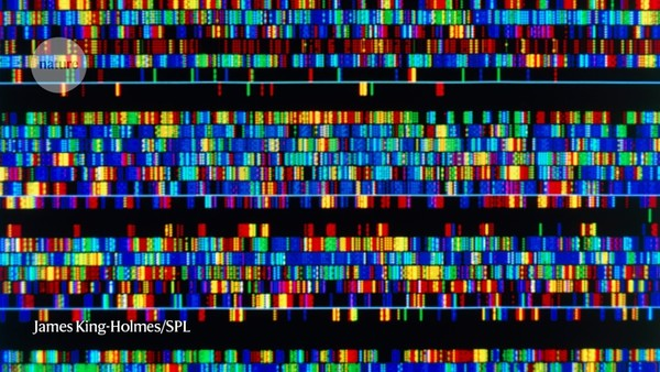 A complete human genome sequence is close: how scientists filled in the gaps