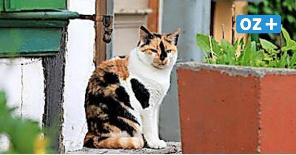 Neue Regeln für Katzenhalter im Amt Bad Doberan-Land