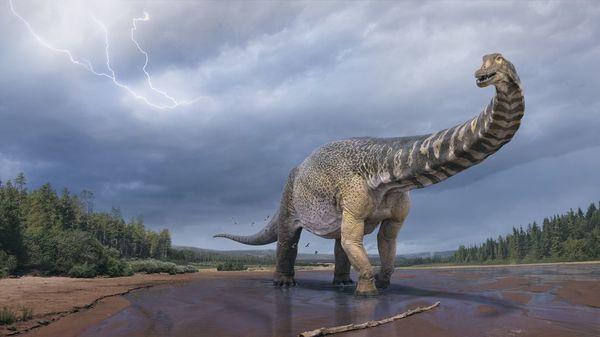 Sechs Meter groß, 30 Meter lang: Forscher entdecken größten Dinosaurier Australiens