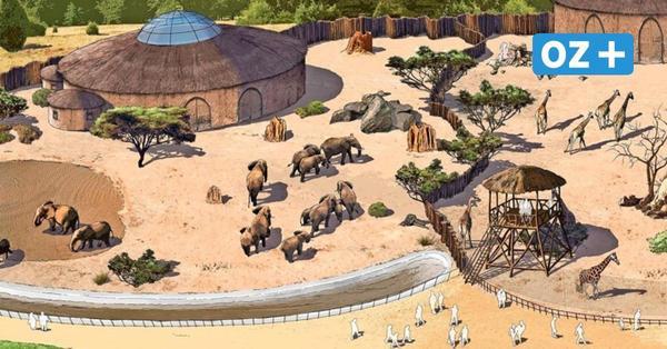 Rostocker Zoo plant neue Großprojekte – welche exotischen Tiere kommen sollen