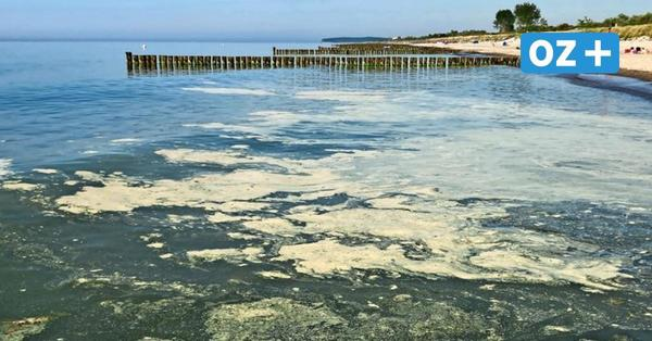 Gelbe Flecken auf dem Wasser: Ist dieser Belag auf der Ostsee gefährlich?