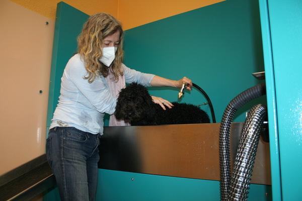 MAZ-Testerin Annie Talbot wäscht in der Teltower Hundewaschanlage ihre Hündin Layla. Foto: Frauke Zimmer