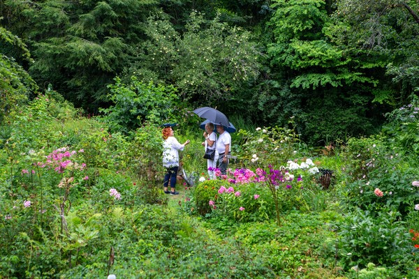 Sechs Falkenseer Privatgärten öffnen am Sonntag.