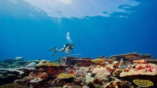 KSLOF, NASA to accelerate the mapping of the world's coral reefs
