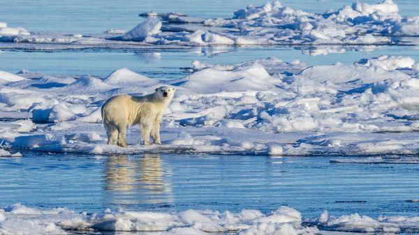 Gewinne statt Klimaschutz: Gefährden Großkonzerne das 1,5-Grad-Ziel?