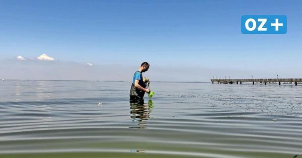 Baden in Vorpommern-Greifswald: In welchem Zustand sind unsere Seen?