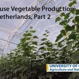 Glasshouse vegetable production in the Netherlands