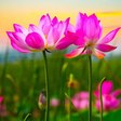 """Beautiful Relaxing Music, Peaceful Soothing Instrumental Music, """"Nature's heart"""" By Tim Janis"""