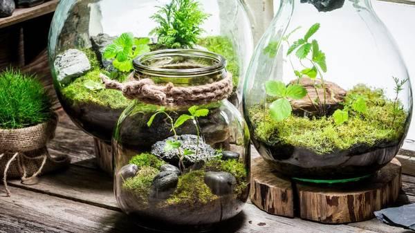 Flaschengarten selbst anlegen: Schritt-für-Schritt-Anleitung für das eigene Mini-Biotop