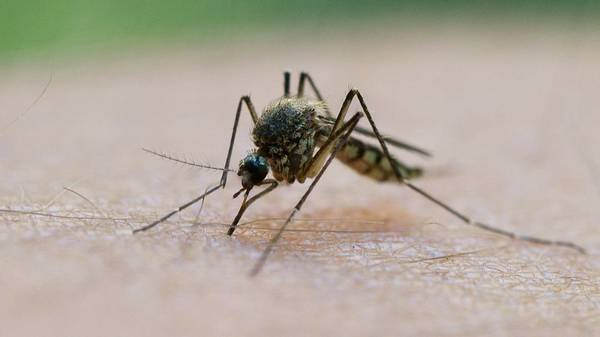West-Nil-Virus Faktencheck: Wie gefährlich ist es und wie kann man sich schützen?