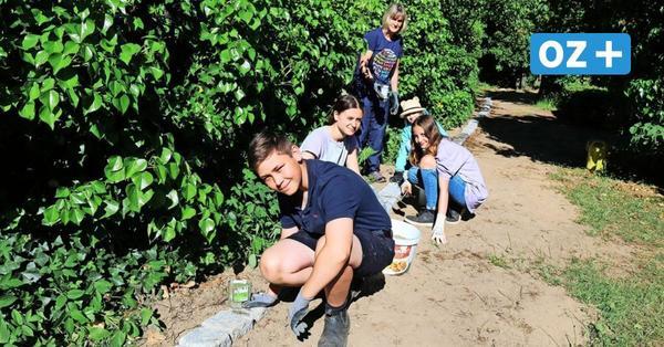 Kühlungsborn: Rövershäger Europaschüler kümmern sich um Kriegsgräber