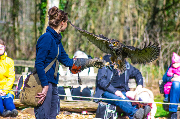 Auch Falken zählen zur tierischen Belegschaft im Wildpark Müden (Foto: Mario Eggers)