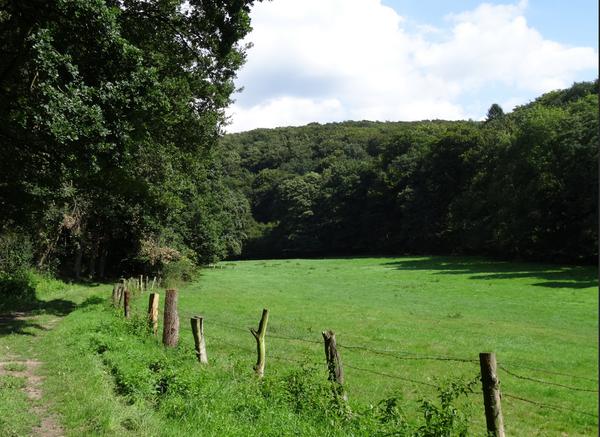Das Walterbachtal gehört zu den beliebten Wanderzielen in der Deister-Süntel-Region. (Foto: GeTour/Stadt Bad Münder)