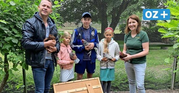 Tierpark Grimmen werden seltene Hühner gesponsort