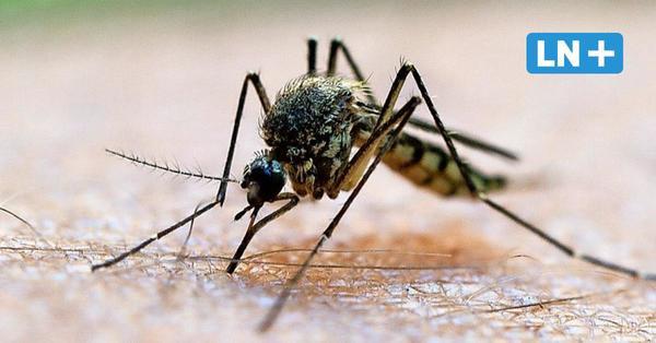 Sommer 2021: Massenweise Mücken, Zecken und Ameisen in Schleswig-Holstein