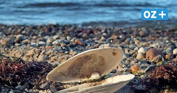 Groß Schwansee: Am Ostseestrand achtsam die Seele baumeln lassen