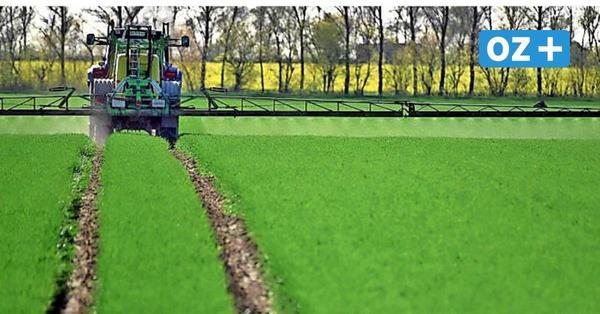 Pestizidreduktion auf Agrarflächen: So entscheidet die Greifswalder Bürgerschaft