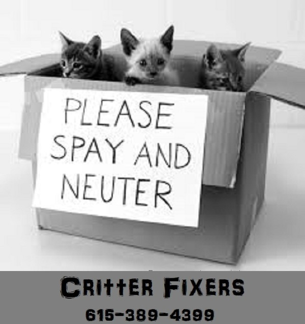 Check out Critter Fixers About or Services section for more info on affordable clinics!