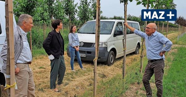 Tremmen: Bäume der Zukunft kommen aus dem Havelland
