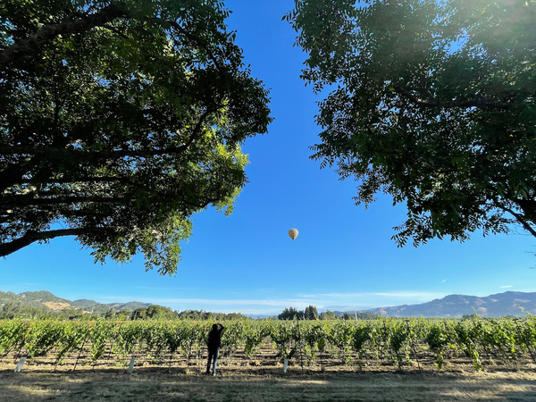 a hot air balloon over Napa Valley from a morning this week