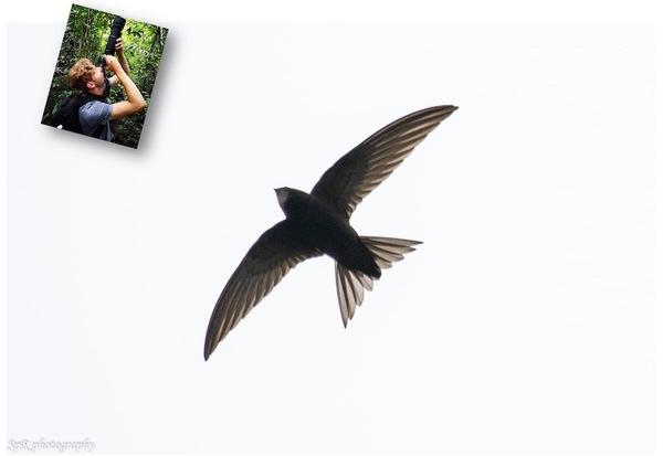 Huisbioloog Sam: De gierzwaluw - De Orkaan Junior