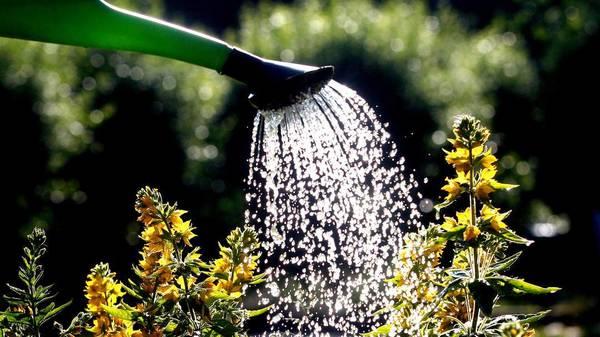 Früh aufstehen lohnt sich: So gießen Sie Ihren Garten bei Hitze richtig